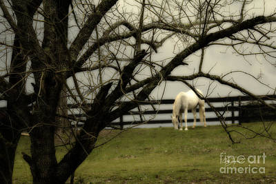 Photograph - April Showers by Cris Hayes