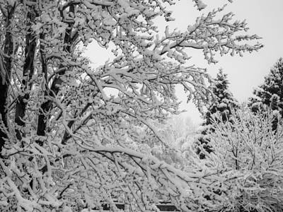 Photograph - April Snow Bw by Ernie Echols