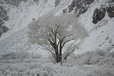 Photograph - April Snow In Utah - Tree by rd Erickson