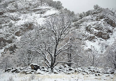 Photograph - April Snow In Utah X - Tree And Rock by rd Erickson