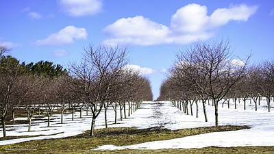 Photograph - April Snow Michigan Traverse City Cherries by LeeAnn McLaneGoetz McLaneGoetzStudioLLCcom
