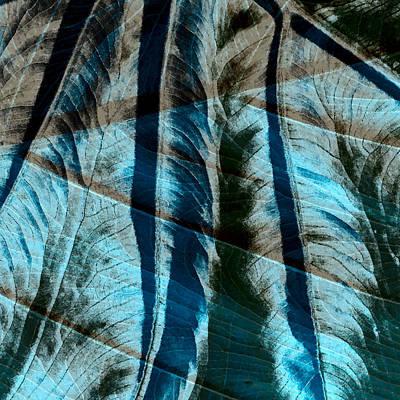 Aqua And Brown Leaf Montage Art Print by Bonnie Bruno