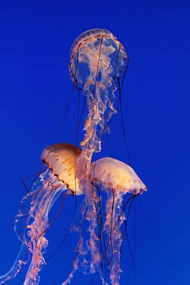 Photograph - Aqua Ballet by Robert Woodward