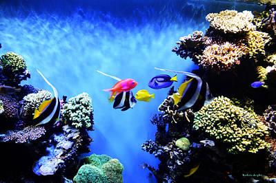 Clown Fish Digital Art - Aquarium 1 by Barbara Snyder