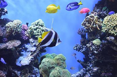 Snorkeling Digital Art - Aquarium 3 by Barbara Snyder