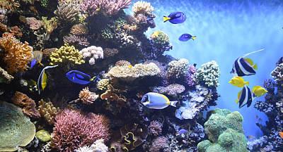 Snorkeling Digital Art - Aquarium 4 by Barbara Snyder