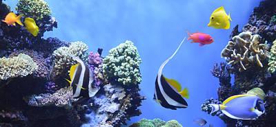 Clown Fish Digital Art - Aquarium 5 by Barbara Snyder