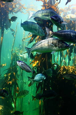 Photograph - Aquarium by Aidan Moran