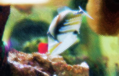 Picasso Trigger Photograph - Aquarium Art 17 by Steve Ohlsen