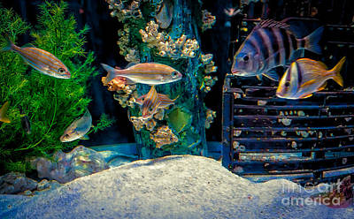 Photograph - Aquarium Art by Kathleen K Parker