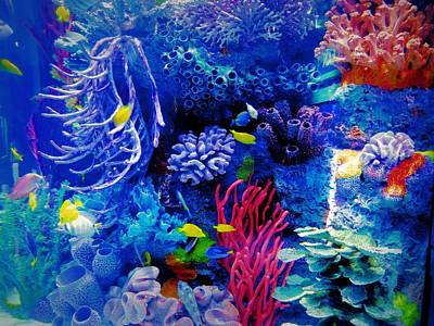 Red Coral Photograph - Aquarium Color by Dan Sproul