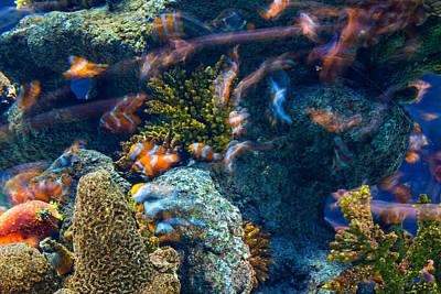 Clown Fish Photograph - Aquarium by Dobromir Dobrinov