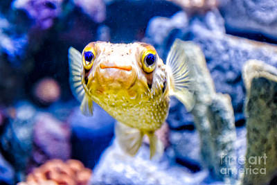 Photograph - Aquarium Of The Americas Exhibit2 by Kathleen K Parker