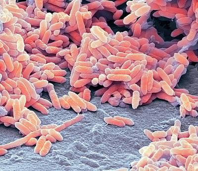 Aquaspirillum Bacteria Art Print