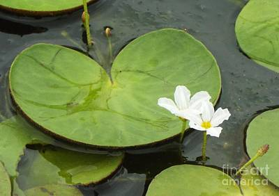 Photograph - Aquatic Floral Beauty I by Audrey Van Tassell