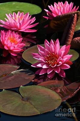 Photograph - Aquatic Floral Flamenco by Byron Varvarigos