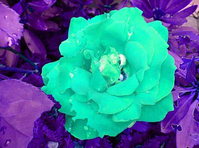 Photograph - Aquatic Rose by Laurie Tsemak