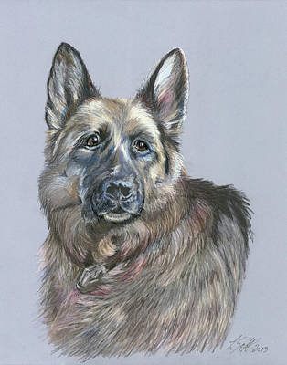Police Dog Drawing - Ara by Laurie Scott