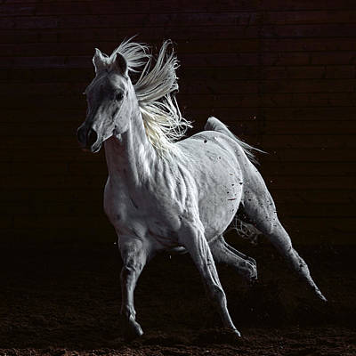 Photograph - Arabian Beauty by Wes and Dotty Weber