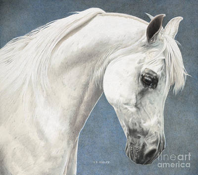 Drawing - Arabian Charisma by Helen Bailey