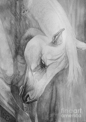 Horse Drawings Painting - Arabian Gentleness by Silvana Gabudean Dobre