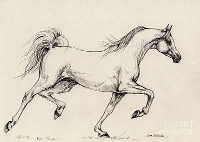 Horses Drawing - Arabian Horse Drawing 31 by Angel  Tarantella