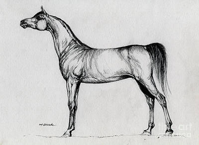 Arabian Horse Drawing 34 Original