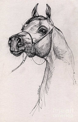 Arabian Horse Drawing 59 Art Print