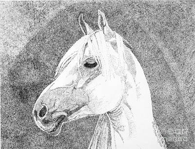 Simplicity Drawing - Arabian Horse by Meri Coury