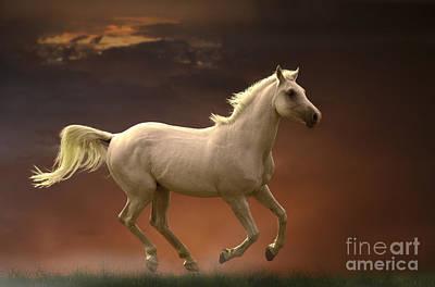 Photograph - Arabian Horse Running by Jean-Michel Labat
