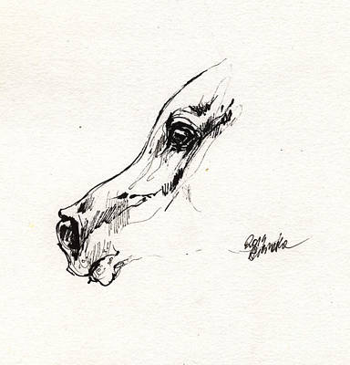 Horses Drawing - Arabian Horse Sketch 2014 05 24 G by Angel  Tarantella