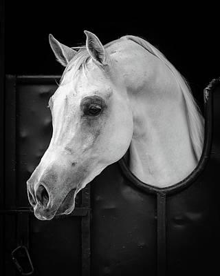 White Horse Wall Art - Photograph - Arabian Horse by Waseem Al-hammad
