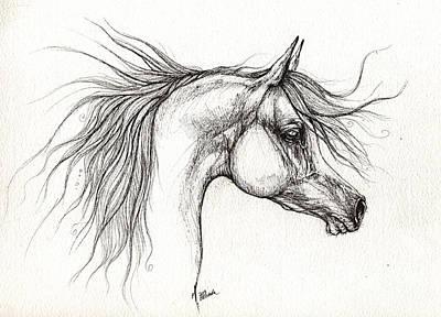 Arabian Horsedrawing 28 08 2013 Art Print