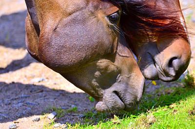 Arabian Horses Original