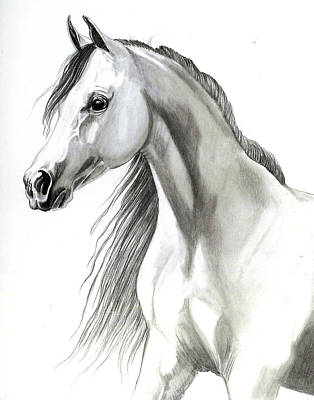 Head Shot Drawing - Arabian Mare by Cheryl Poland