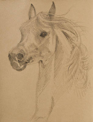 Drawing - Arabian Portrait by Jani Freimann
