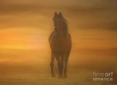 Horse Photograph - Arabian Sands by Stephanie Laird