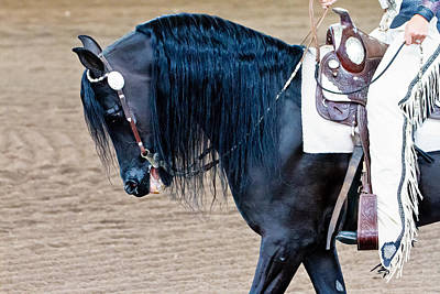 Photograph - Arabian Show Horse by Ben Graham