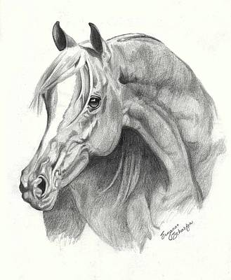 Drawing - Arabian Stallion by Suzanne Schaefer