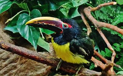 Black Photograph - Aracari by Savanna Paine