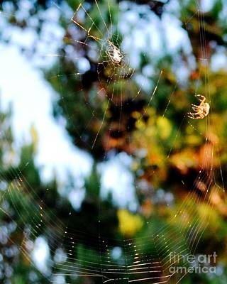 Photograph - Arachnid Art by Third Eye Perspectives Photographic Fine Art