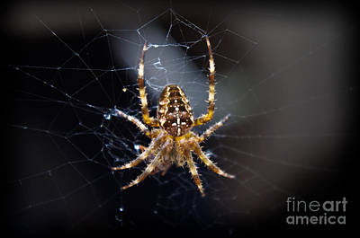 Photograph - Arachnid Awaits by Adria Trail