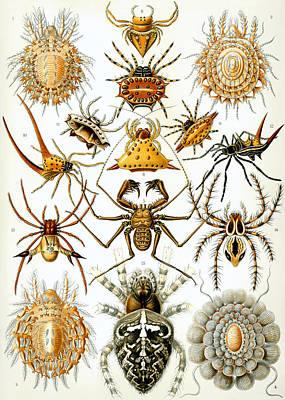 Arachnida Art Print by Georgia Fowler