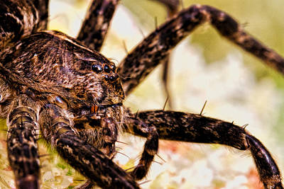 Spider Photograph - Arachnophobia by Bob Orsillo