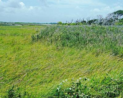 Photograph - Aransas Nwr Coastal Grasses by Lizi Beard-Ward