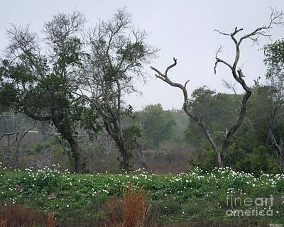Photograph - Aransas Nwr Landscape by Lizi Beard-Ward