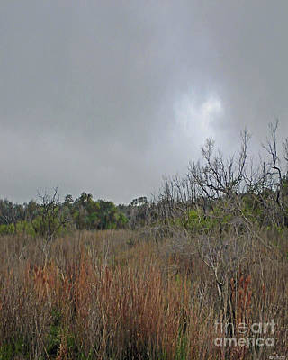 Photograph - Aransas Nwr Texas Coastland by Lizi Beard-Ward
