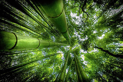Bamboo Wall Art - Photograph - Arashiyama by David Ros