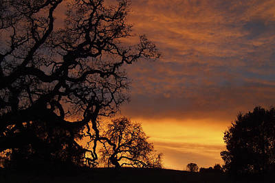 Arastradero Open Space Preserve Sunset Art Print by Priya Ghose