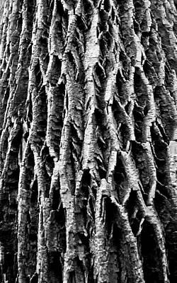 Photograph - Arbor Wisdom by  Tina McGinley